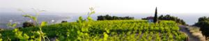 Terres des templiers - Foire de Beauvais